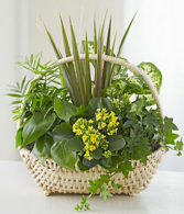 Planter with Blooming
