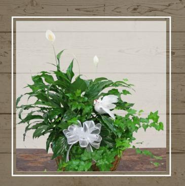 Planter with Dove