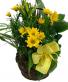 Planter With Fresh Plants