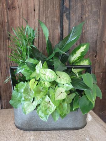 Planters fresh green plants