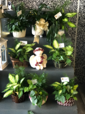 Planters Funeral planters