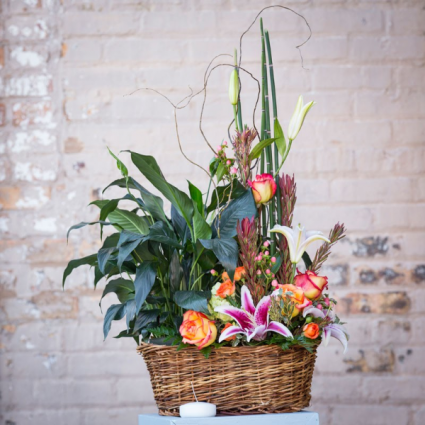 Plants and Blooms plant and arrangement combo
