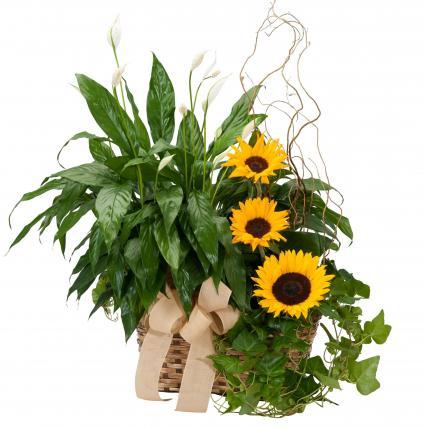 Plants and Sunshine Basket Arrangement