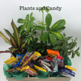 Plants & Candy Gift Basket