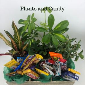 Plants & Candy Gift Basket in Abbotsford, BC | BUCKETS FRESH FLOWER MARKET