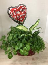 V100 - Plants for my Valentine Plant