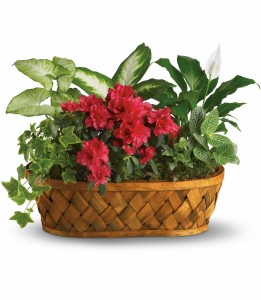 Plants Galore H901A