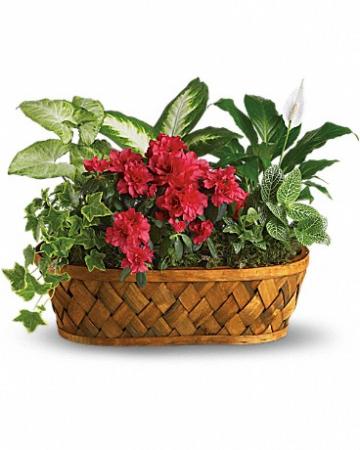 Plants Galore T90-1