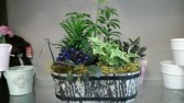 plants in a crate mixed tropical plants