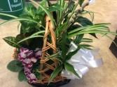 Plants in basket  Planter basket