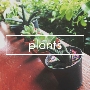 Plants Plant in Las Vegas, NV | AN OCTOPUS'S GARDEN