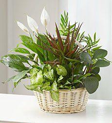 Plants Plants