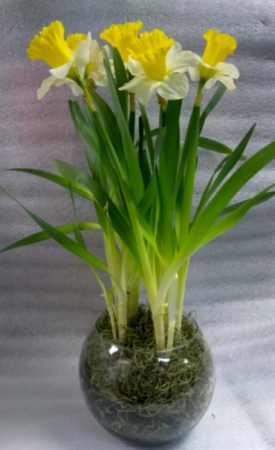Playful Daffodils in Bubble Bowl - 2 Left
