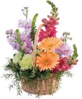Pleasant Pastel Basket Arrangement