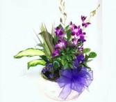 Pleasantly Purple Dish Garden With Fresh Cut Orchids