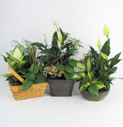 Plush Planters Planter