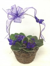 PM-68 African Violets Basket