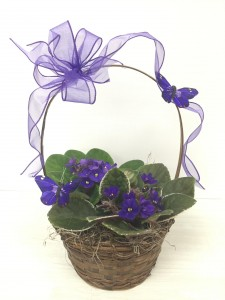 PM-68 African Violets Basket  in Phoenix, AZ | PAYNE & MORRISON FLORISTS