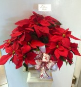 Centerpiece Poinsettia 10""