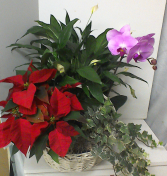 Poinsettia Combination Plant Basket