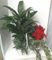 Poinsettia Combinition Plant Basket
