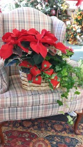 Poinsettia and green plant  Double basket