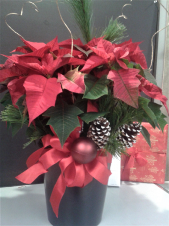 """POINSETTIA AT IT'S BEST! 8""""poinsettia all dressed for the holidays!"""