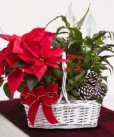 Poinsettia Garden Basket Christmas Planter