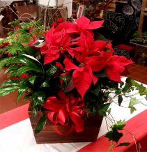 Poinsettia Garden Planter