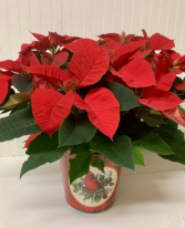 Poinsettia in Cardinal Keepsake