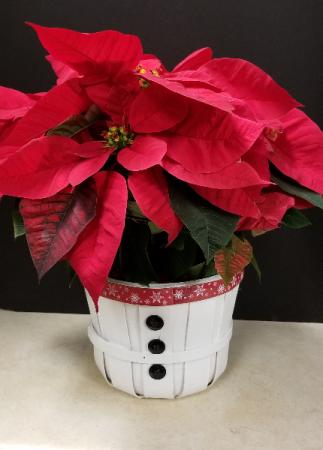 Poinsettia in snowman basket Blooming Plants