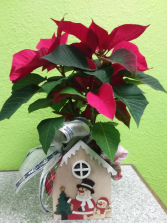 Poinsettia  in wooden house