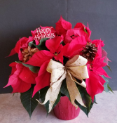 POINSETTIA  POTTED PLANT