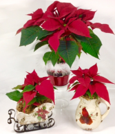 Poinsettia Sleigh, Santa Tin or Cardinal Pitcher