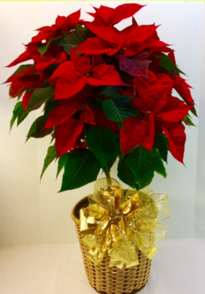Poinsettia topiary  in Troy, MI | ACCENT FLORIST