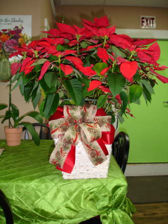 Poinsettia-Large Town South Floral