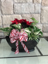 POINSETTIA WITH MIX OF GREEN PLANTS