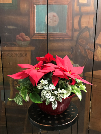 Poinsettia with Plants