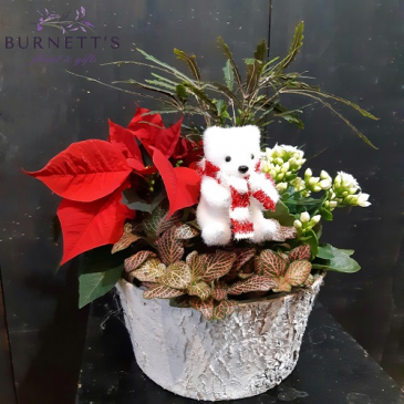Polar Planter Christmas