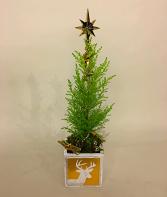 Polar  Star  Tree Christmas Planter