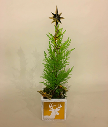 Polar  Star  Tree Christmas Planter