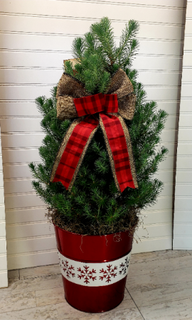 Pop's Christmas Tree EXCLUSIVELY AT MOM & POPS in Ventura, CA | Mom And Pop Flower Shop