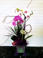 Pop's MD Orchid Garden  EXCLUSIVELY AT MOM & POPS