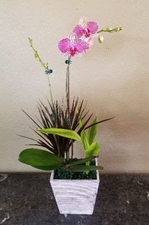 Pop's Orchid Garden Exclusively at Mom & Pops in Ventura, CA | Mom And Pop Flower Shop