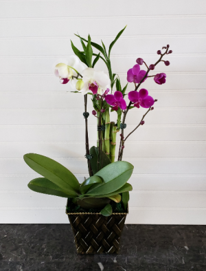 POP'S ORCHID GARDEN EXCLUSIVELY AT MOM & POPS in Oxnard, CA | Mom and Pop Flower Shop