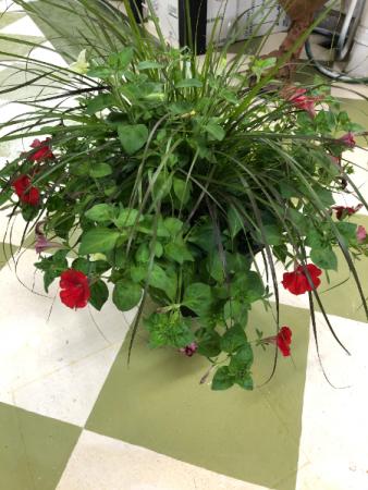 Porch pot Potted plant