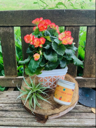 Porch Swing Trio Blooming Plant, Candle, and Air Plant