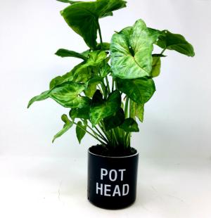 Pot Head!!  in Clearwater, FL | FLOWERAMA