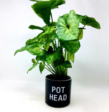 Pot Head!!