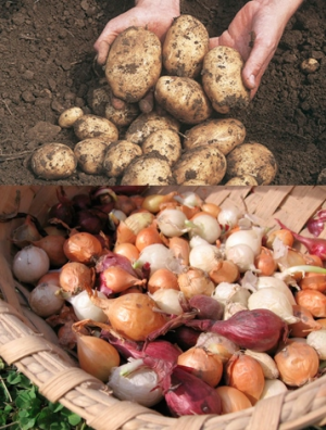 Potatoes and Onions  in Valley City, OH | HILL HAVEN FLORIST & GREENHOUSE